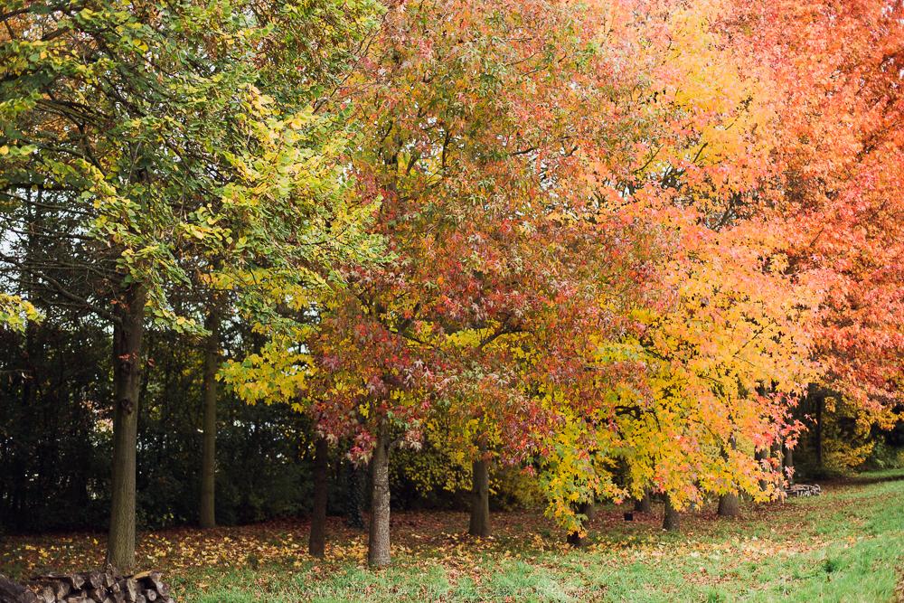seance famille arboretum chatenay malabry laboheme-photographie-2